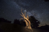 Dead Tree and Milky Way